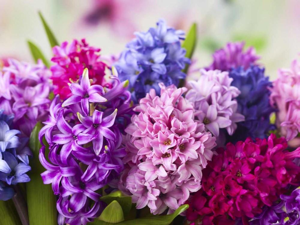 3-blomst